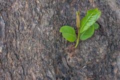 małe drzewko Fotografia Royalty Free
