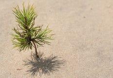 małe drzewko fotografia stock