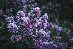 małe fioletowy kwiat Zdjęcie Stock