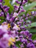 ma?e fioletowy kwiat zdjęcie stock
