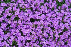 małe kwiatki Zdjęcie Royalty Free