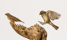 małe ptaki Zdjęcia Royalty Free
