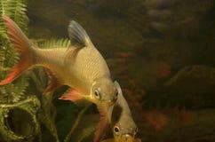 Małe ryba Obrazy Stock