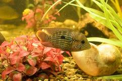 Małe ryba Obraz Royalty Free