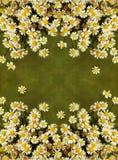 Małe stokrotka kwiatów granicy Fotografia Stock