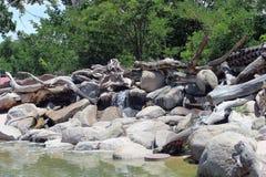 małe wodospadu Obrazy Royalty Free