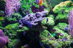 Mała egzot ryba Fotografia Royalty Free