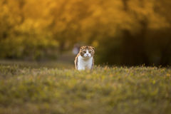 Mała figlarka patrzeje na trawie Zdjęcie Stock