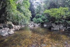 Mała halna rzeka w lesie tropikalnym Obrazy Royalty Free