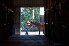 ma horyzontalnego zwierzaka konia fotografia royalty free
