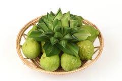 Ma, kafr pijawka lub wapno wapno lub Mauritius lub Papeda lub bergamota Papeda lub bergamota (cytrusa hystrix DC ) Rutaceae Obraz Royalty Free