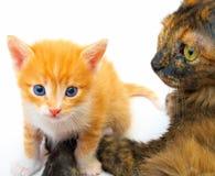 Ma with kitten Stock Photo
