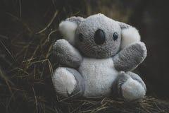 mała koala Fotografia Royalty Free