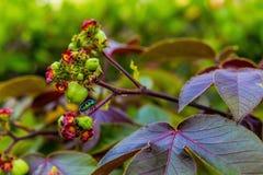 Ma?a kolorowa jaskrawa pluskwa na tropikalnym kwiacie zdjęcie stock