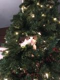 Mała kot choinka Zdjęcia Stock