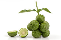 Ma-krut thai name or Kaffir lime or leech lime or Mauritius Papeda or Bergamot. (Citrus hystrix DC.) Rutaceae. Stock Photos