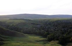 Mała lasowa dolina w granu sabana, Wenezuela Zdjęcia Stock