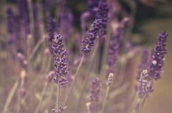 Mała menchia kwitnie w polu podczas lata motyle zielone niebo ilustracyjnego lata temat wektora Obraz Royalty Free
