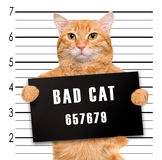 Mán gato Imagenes de archivo