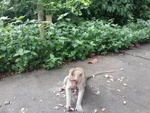 Małpa! Fotografia Royalty Free