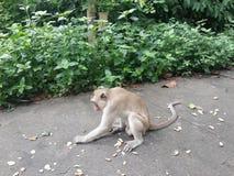 Małpa! Zdjęcia Royalty Free