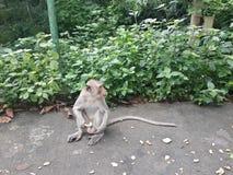 Małpa! Obrazy Stock