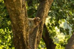 Małpa Zdjęcia Stock