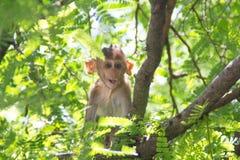 Małpa dziecko Obraz Royalty Free