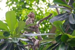 Małpa dziecko Fotografia Royalty Free