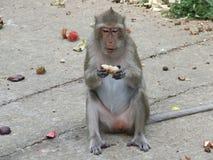 Małpa je jedzenie obrazy stock