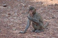 Małpa jest w Tajlandzkim parku Zdjęcia Stock