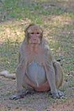 Małpa jest w Tajlandzkim parku Obraz Royalty Free