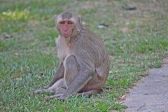 Małpa jest w Tajlandzkim parku Zdjęcie Stock