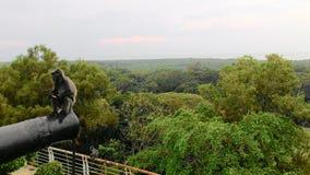 Małpa na kanonie Fotografia Royalty Free