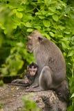 Małpa siedzi na drzewie w lesie Obraz Royalty Free
