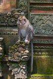 Małpa w lasu parku w Ubud, Bali - Indonezja Obraz Royalty Free