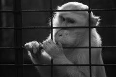 Małpa w zoo Zdjęcie Stock
