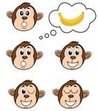 Małpa z kilka pozy Obraz Royalty Free