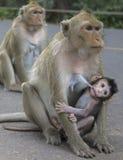Małpa z potomstwami Zdjęcia Royalty Free