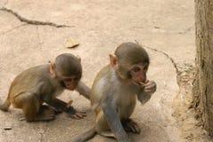 Małpi -2 zdjęcia royalty free