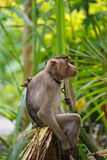 Małpi biznes obraz royalty free