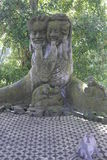 Małpi las Obrazy Stock