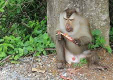 Małpi las Zdjęcie Royalty Free