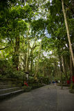Małpi las i wysocy drzewa Obraz Stock
