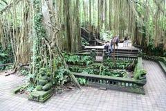 Małpi las w Bali Zdjęcie Stock