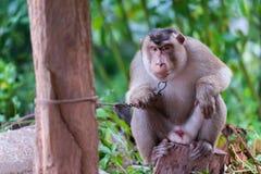 Małpi obsiadanie Zdjęcie Royalty Free