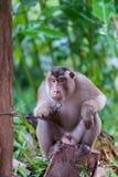 Małpi obsiadanie Obrazy Stock