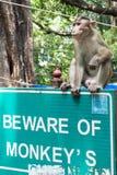 Małpi obsiadanie na znaku, Elephanta wyspa Zdjęcia Royalty Free