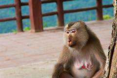 Małpi obsiadanie pod drzewem Obrazy Royalty Free