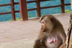 Małpi obsiadanie pod drzewem Fotografia Royalty Free
